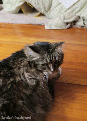 コタツの出入り口(猫ビデオ付き)_b0253205_12301955.jpg