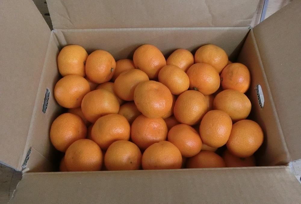オレンジ色_d0299605_20404355.jpg