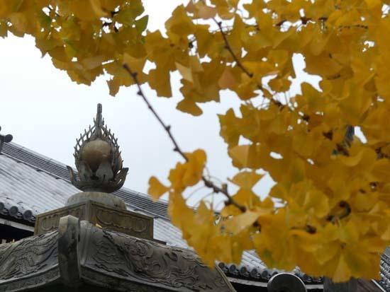 西本願寺の大イチョウ_e0048413_17151020.jpg