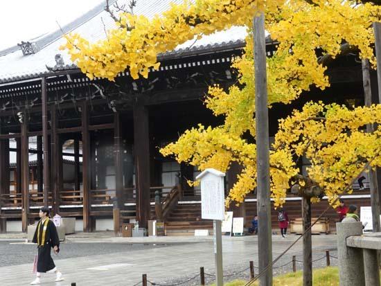 西本願寺の大イチョウ_e0048413_17171300.jpg