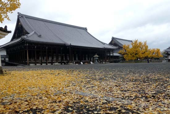西本願寺の大イチョウ_e0048413_17173075.jpg