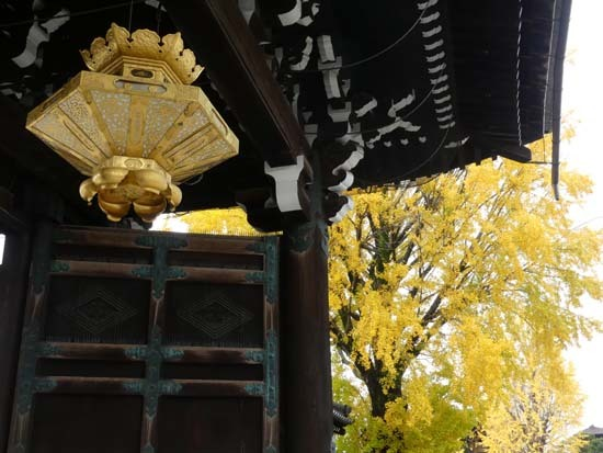 西本願寺の大イチョウ_e0048413_17173536.jpg