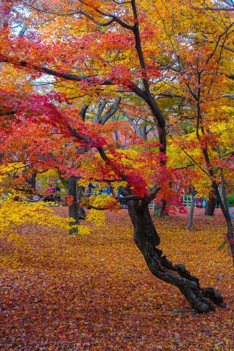 京都2019 その1_c0220824_19182020.jpg
