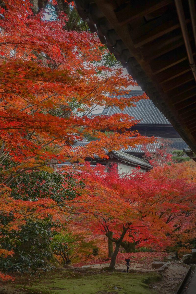 京都2019 その1_c0220824_19182490.jpg