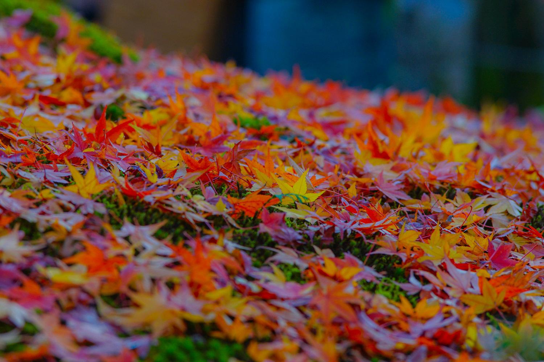 京都2019 その1_c0220824_19182958.jpg