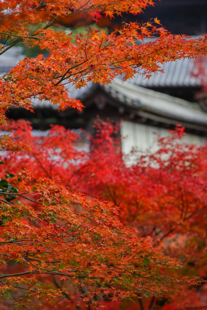 京都2019 その1_c0220824_19352342.jpg