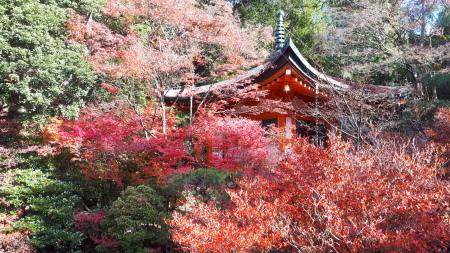京都紅葉速報2019 毘沙門堂_d0106134_16540161.jpg