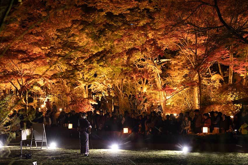 東山動植物園 紅葉ライトアップ2019~演奏編~_f0373339_10542384.jpg