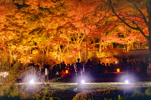 東山動植物園 紅葉ライトアップ2019~演奏編~_f0373339_11042086.jpg