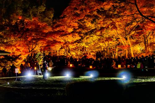 東山動植物園 紅葉ライトアップ2019~演奏編~_f0373339_11062690.jpg