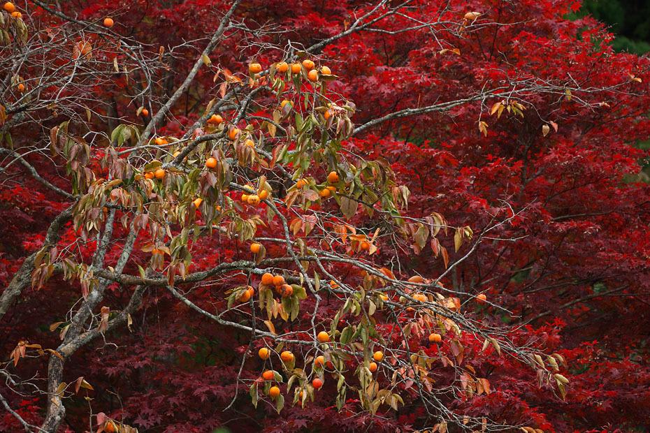 秋色重ね #2_c0067040_22073613.jpg