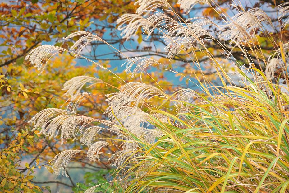 秋色重ね #2_c0067040_22083013.jpg