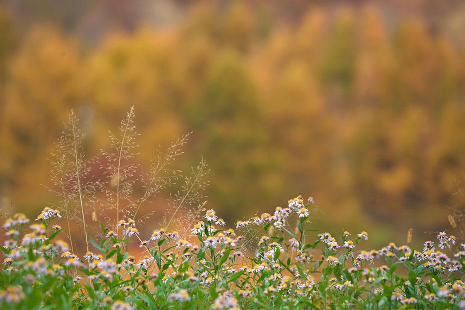 秋色重ね #2_c0067040_22090520.jpg