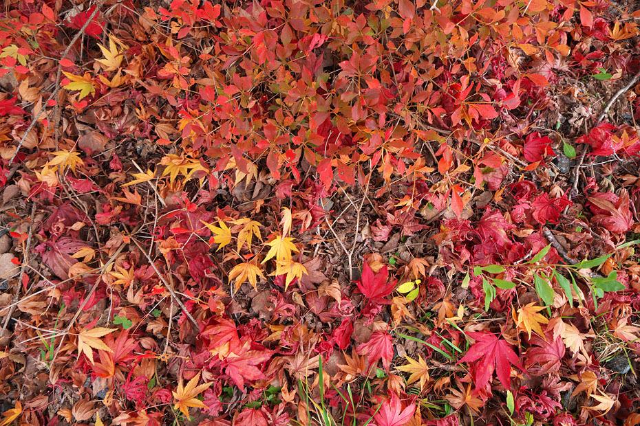 秋色重ね #2_c0067040_22092302.jpg