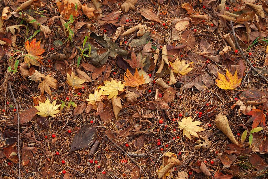 秋色重ね #2_c0067040_22093163.jpg