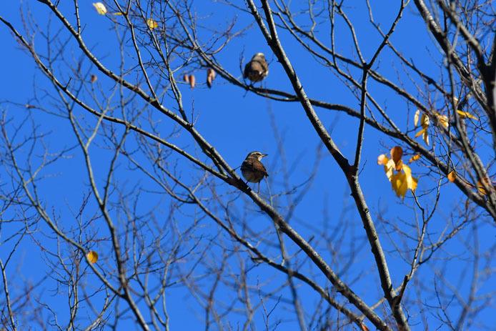 初冬の公園_d0149245_23151088.jpg
