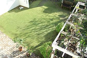 12月の芝生*_a0184348_16245016.jpg
