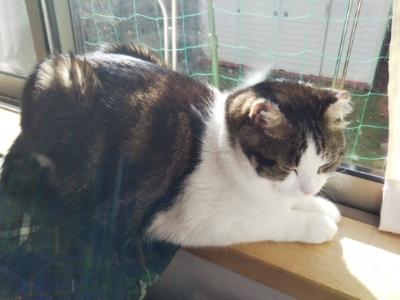 トム(猫)と昼寝じゃ元気になれない・・・散歩_c0330749_17551921.jpg