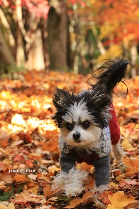 森散歩♪_c0145250_15401655.jpg