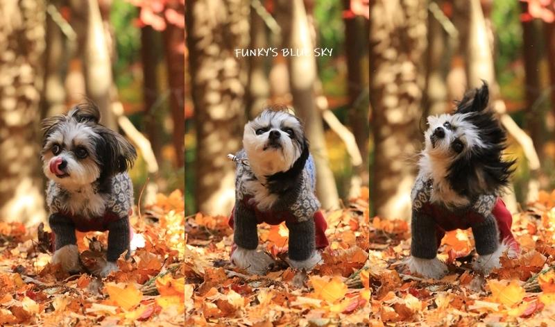 森散歩♪_c0145250_15402047.jpg