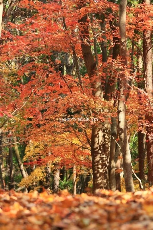 森散歩♪_c0145250_15402285.jpg
