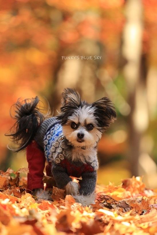 森散歩♪_c0145250_15402833.jpg