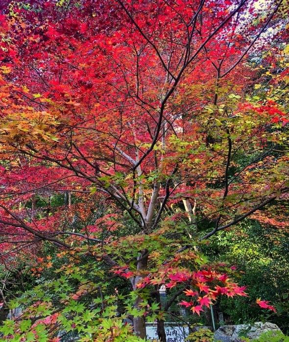 紅葉の高尾山へ🍁_a0092659_19532020.jpg