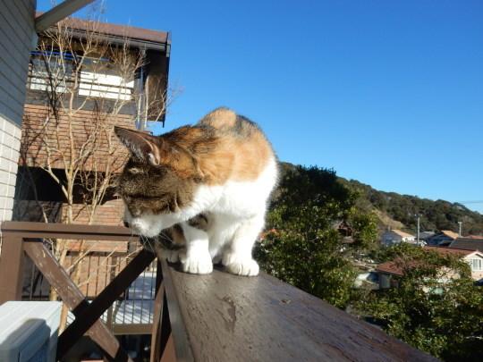 '19,12,3(火)トルコのエフェソス遺跡の猫ちゃん!_f0060461_10321761.jpg