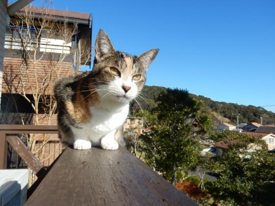 '19,12,3(火)トルコのエフェソス遺跡の猫ちゃん!_f0060461_10325635.jpg