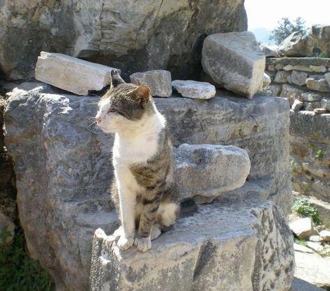 '19,12,3(火)トルコのエフェソス遺跡の猫ちゃん!_f0060461_10491251.jpg