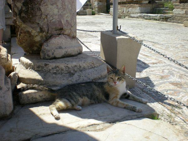 '19,12,3(火)トルコのエフェソス遺跡の猫ちゃん!_f0060461_10512501.jpg