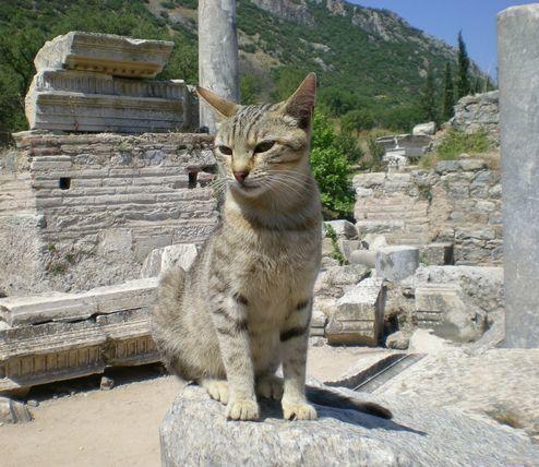 '19,12,3(火)トルコのエフェソス遺跡の猫ちゃん!_f0060461_10523921.jpg