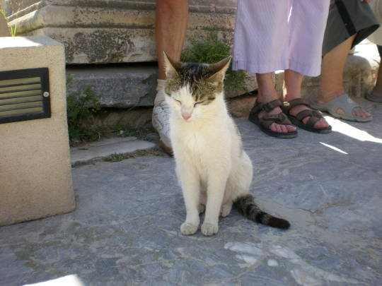 '19,12,3(火)トルコのエフェソス遺跡の猫ちゃん!_f0060461_10563257.jpg