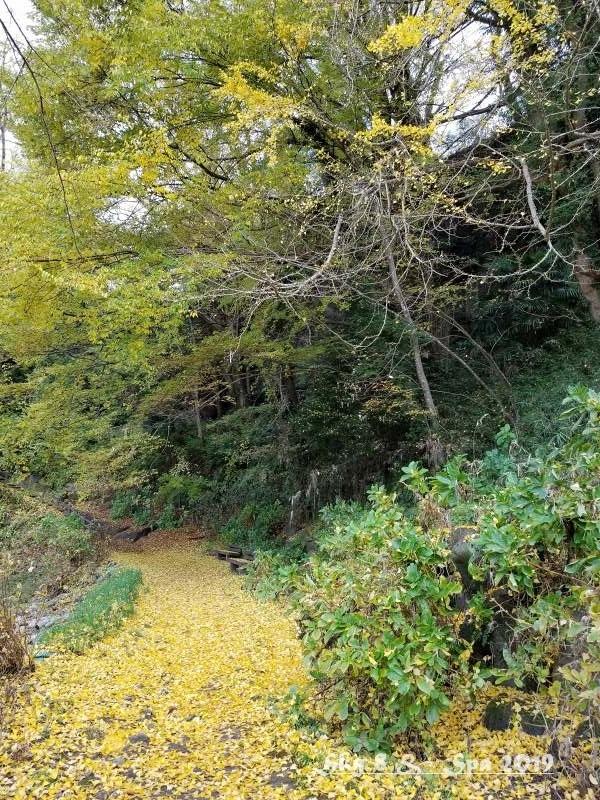 ◆ ギネス認定・世界最古の宿へ、その9 日本三奇橋「猿橋」へ(2019年11月)_d0316868_21363843.jpg