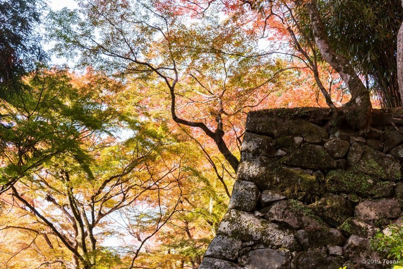 談山神社_c0350572_21403077.jpg