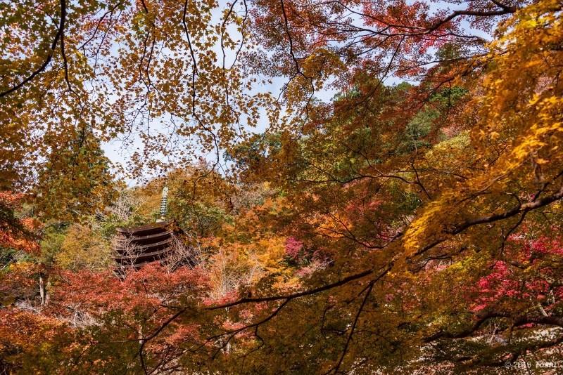 談山神社_c0350572_21410699.jpg