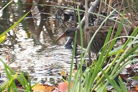 ★冬鳥が増えてきました・・・先週末の鳥類園(2019.11.30~12.1)_e0046474_14293375.jpg