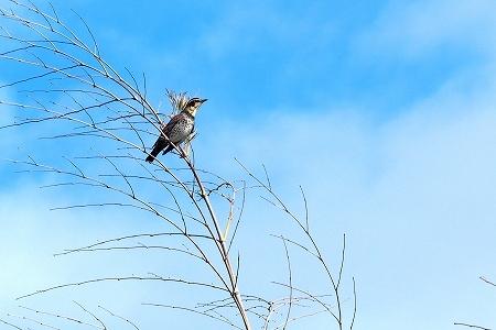 ★冬鳥が増えてきました・・・先週末の鳥類園(2019.11.30~12.1)_e0046474_14295090.jpg