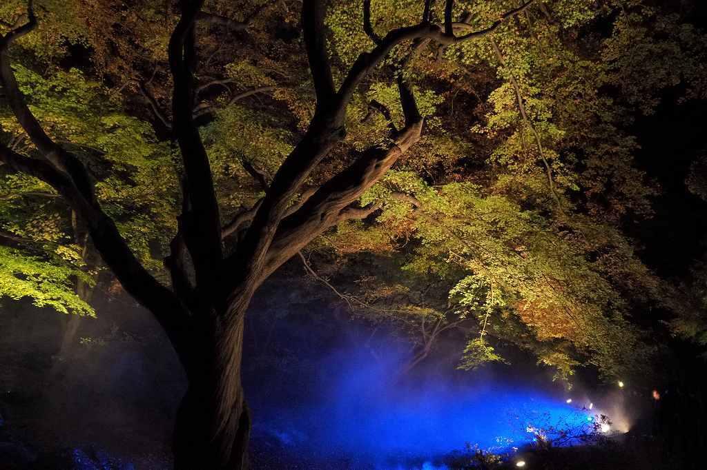 六義園へ夜の紅葉狩りに行ってきました。_e0348392_20213111.jpg