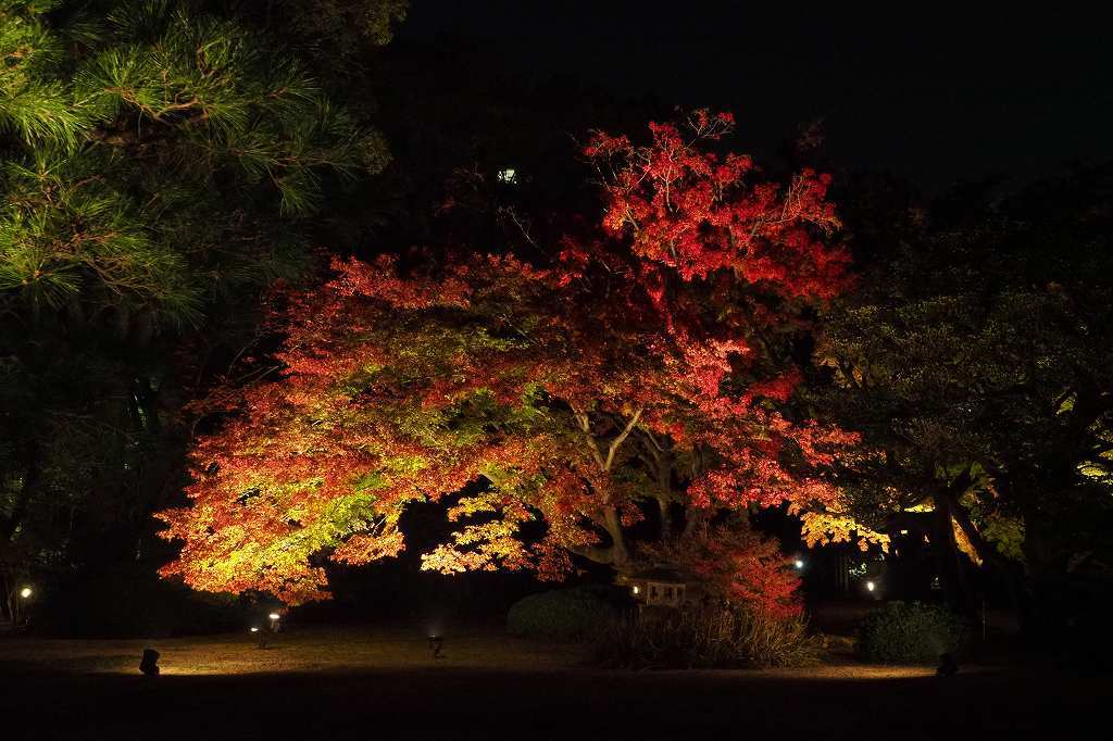 六義園へ夜の紅葉狩りに行ってきました。_e0348392_20223949.jpg