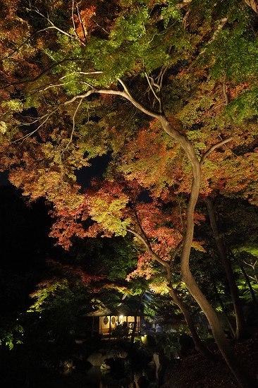六義園へ夜の紅葉狩りに行ってきました。_e0348392_20235425.jpg