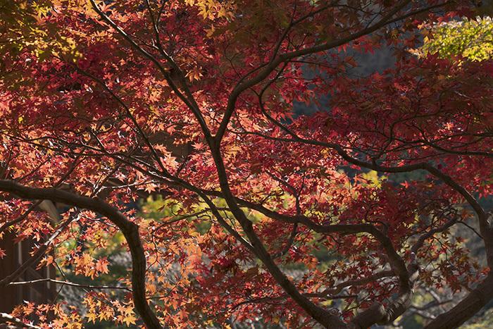 特別拝観・鎌倉長寿寺の紅葉 _b0145398_22591841.jpg