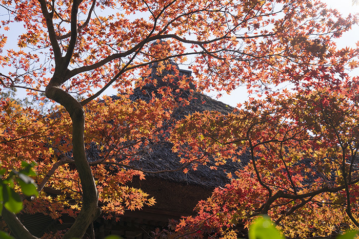 特別拝観・鎌倉長寿寺の紅葉 _b0145398_22594190.jpg