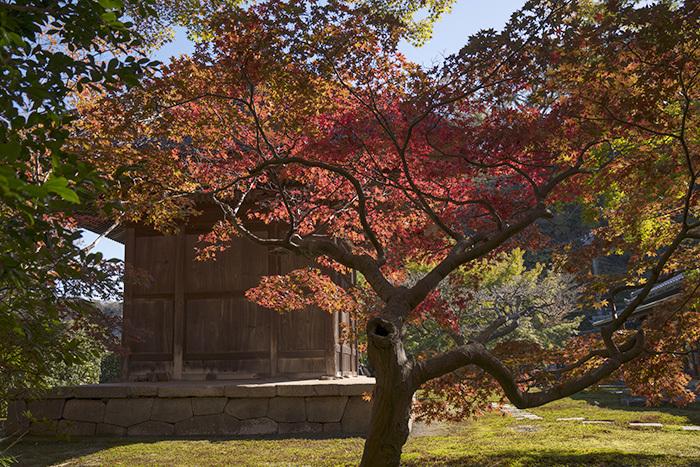特別拝観・鎌倉長寿寺の紅葉 _b0145398_23013960.jpg