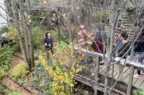 「緑でつながる庭づくり 秋編」開催しました!_c0124100_12345049.jpg