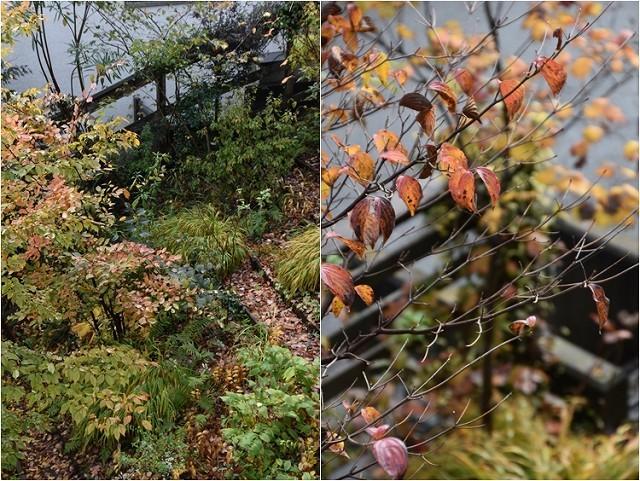 「緑でつながる庭づくり 秋編」開催しました!_c0124100_13050556.jpg