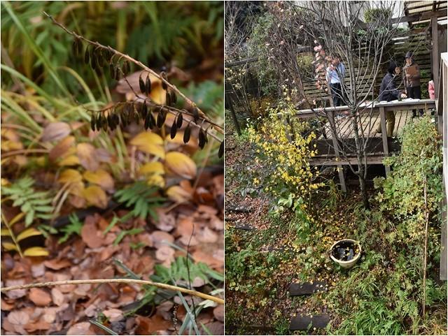 「緑でつながる庭づくり 秋編」開催しました!_c0124100_13051192.jpg