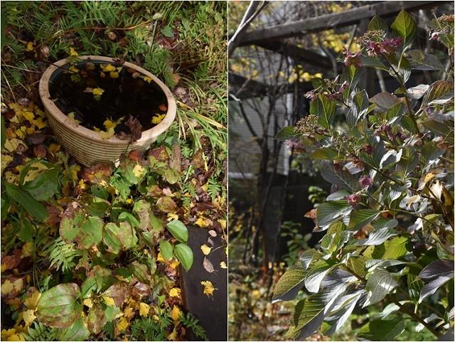 「緑でつながる庭づくり 秋編」開催しました!_c0124100_13051747.jpg