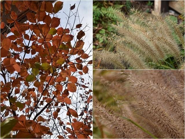 「緑でつながる庭づくり 秋編」開催しました!_c0124100_13051941.jpg