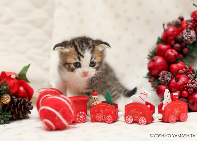 クリスマスショット。。。_f0031022_07144794.jpg